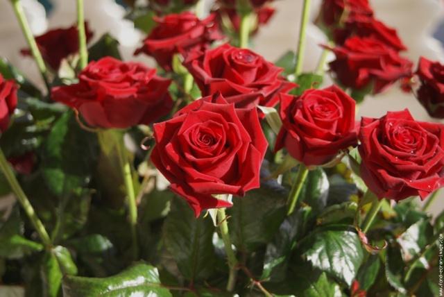 bouquet-roses1