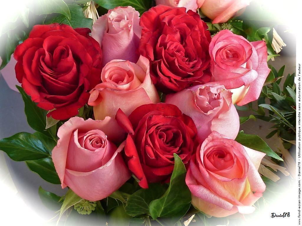 Le poids des maux le choc des photos les cahiers for Un bouquet de roses